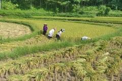 Chương trình 30a giúp hai huyện khó của Hòa Bình thoát nghèo