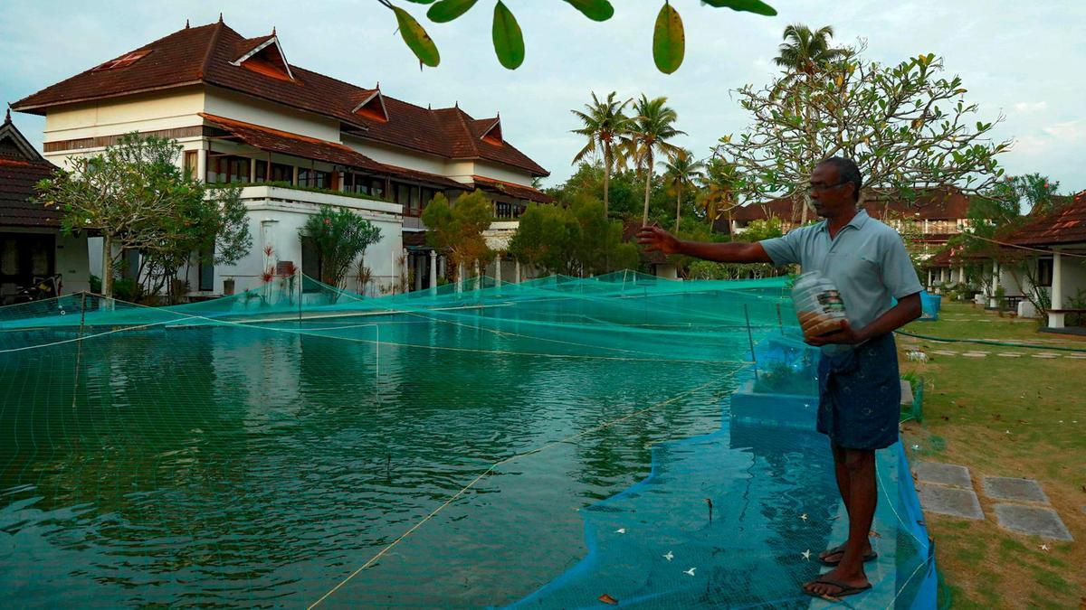 Ế ẩm chưa từng có, resort 5 sao lấy hồ bơi làm ao nuôi cá
