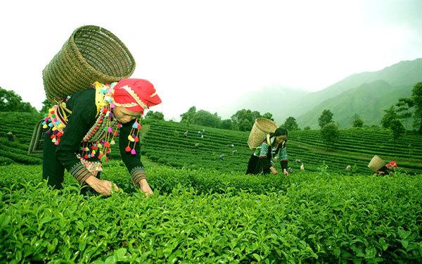 Lai Chau develops community tourism