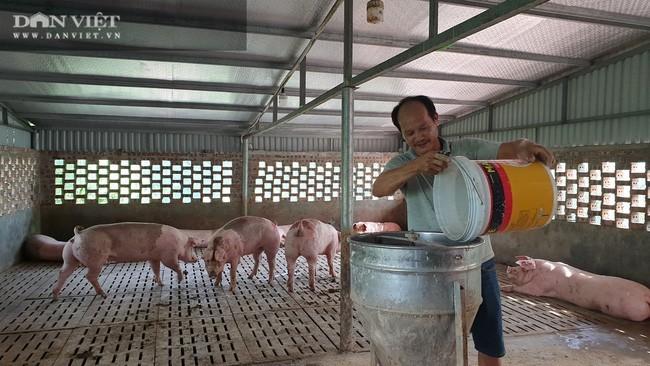 Nuôi thứ lợn cho ăn sâm, nghe nhạc trữ tình bán cho nhà giàu