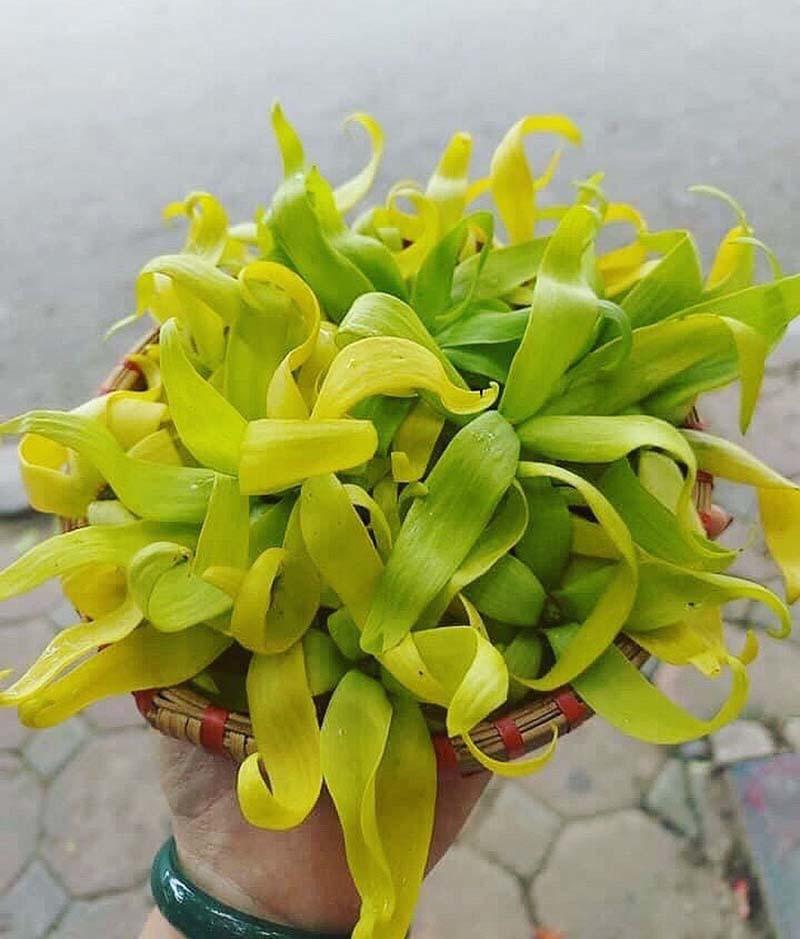 Hoa hoàng lan đắt giá, 1,5 triệu/kg vẫn được lùng mua