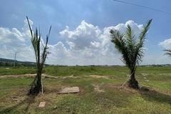 Bình Dương thu hồi hàng trăm hecta đất cao su làm khu công nghiệp
