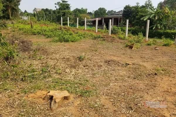 Chủ rừng ở Quảng Trị bị phạt hơn 300 triệu vì... phá rừng