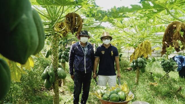 """Hàng chục tấn đu đủ Quảng Nam bị ép giá, người Đà Nẵng ra tay """"giải cứu"""" hết veo"""