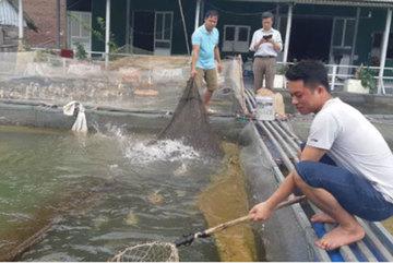 Thâm nhập trại nuôi loài cá đen trũi, dài cả mét lượn lờ như 'tàu ngầm'