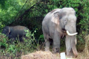 New-born wild elephant joins herd in Dong Nai