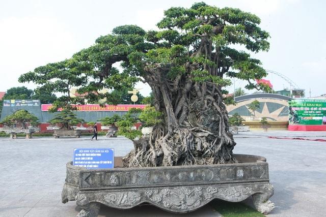 Sanh lá mũi hài ký đá cổ nhất châu Á, đại gia đổi 8 lô đất vẫn không bán
