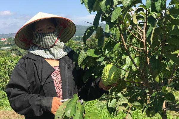 Có một vùng đất trồng thứ na lạ ra trái khổng lồ, ai trông thấy cũng trầm trồ