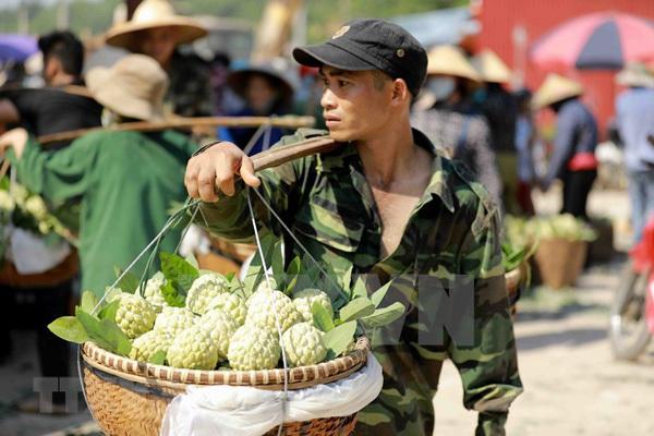 Lang Son,vietnam fruit