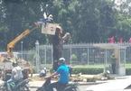 Lý do cây xanh trước cổng Hội trường Thống Nhất bị đốn hạ
