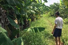 Kết quả ADN xác định Lê Xuân Tùng là  kẻ hiếp dâm cháu bé ở vườn chuối