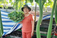 Quả trĩu cành, gà đẻ trứng trên sân thượng của bà chủ nhà trọ Sài Gòn