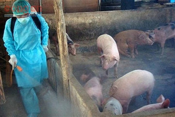African swine feverunder control