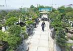 A visit to Hanoi's largest bonsai market