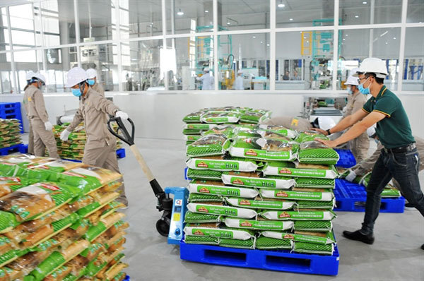 Vietnamese rice takes bite out of global market