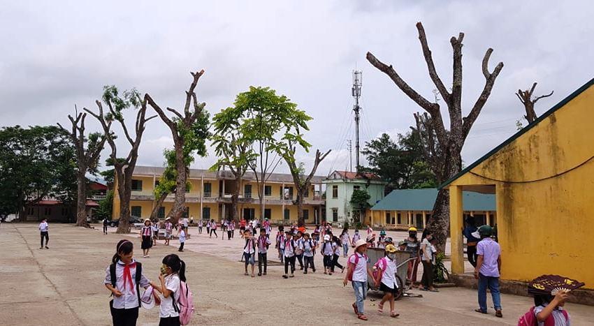 Thanh Hóa: Hàng cây 60 năm tuổi của trường Tiểu học 'trọc lóc' trước năm học mới