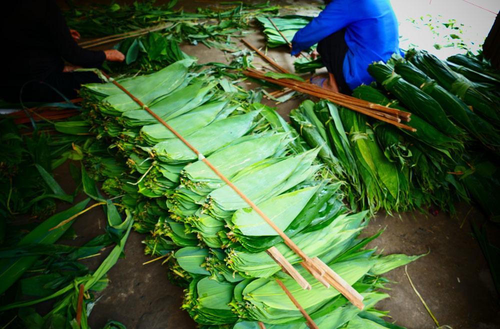 Người dân kiếm tiền triệu, đổi đời từ loại lá dài nửa mét