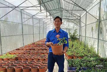 Anh nông dân trẻ bất ngờ thu 10 tỷ đồng nhờ trồng sâm quý trong chậu