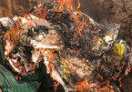 24 tấn nội tạng lợn nhiễm dịch tả châu Phi tuồn ra thị trường