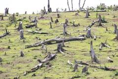 Để mất hàng trăm hecta rừng,2 trưởng ban ở Gia Lai bị khởi tố