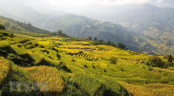 Lao Cai,rice fields,Y Ty,vietnam travel