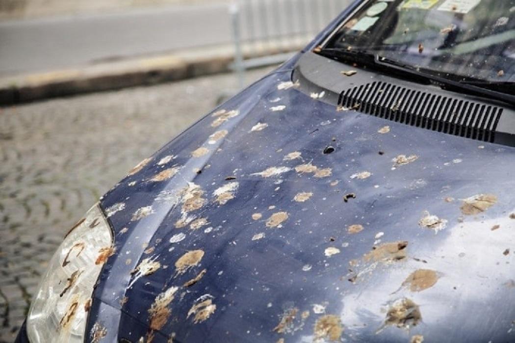 Những 'thủ phạm' phá hỏng lớp sơn xe ô tô