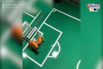 Người đàn ông kỳ công huấn luyện đội bóng đá cá vàng