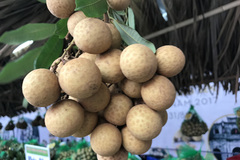 Hung Yen longan farmers reach out to world market