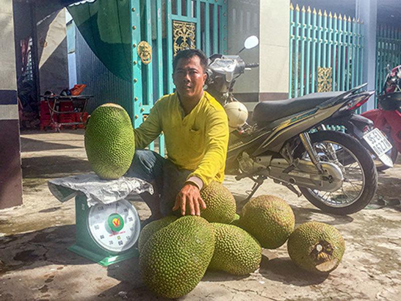 Giá mít Thái tăng vù vù, bán 1 trái to thu hơn nửa triệu đồng