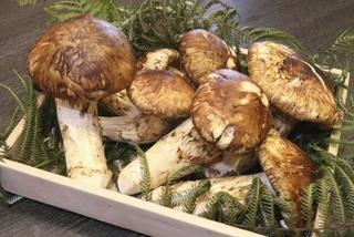The four most expensive mushrooms sought by wealthy Vietnamese