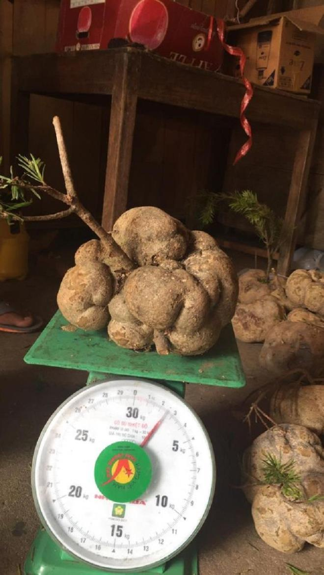 4 loại nấm đắt đỏ được săn lùng ở Việt Nam