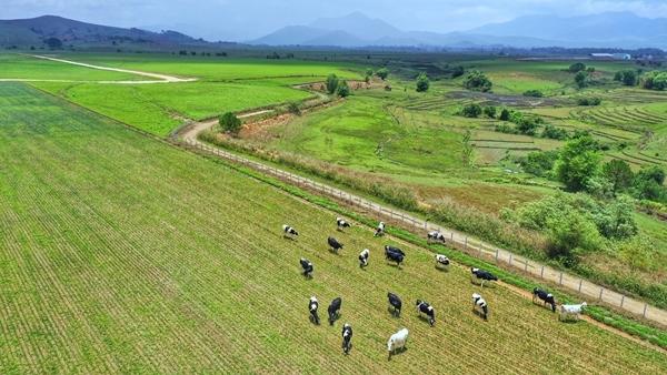 Hệ thống trang trại Vinamilk tăng trưởng ấn tượng cả chất và lượng
