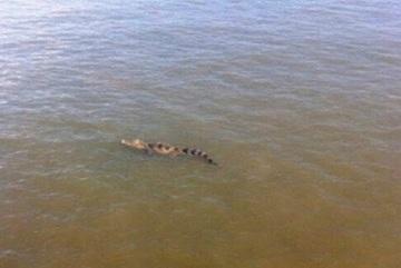 Ông Lê Trương Hải Hiếu: Cảnh báo về cá sấu xuất hiện trên sông là cần thiết
