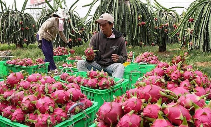 Fruit exports to China fall, but are offset by more exports to Thailand