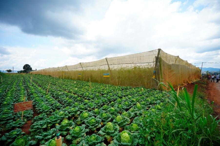 Smartphones 'determine the fate' of VND-billionaire farmers
