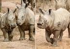 Những thú non bán hoang dã sinh ở Vinpearl Safari bây giờ ra sao?