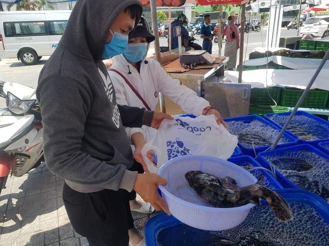 Cam Ranh tồn 1.000 tấn cá mú, lại rộ chiến dịch 'giải cứu'