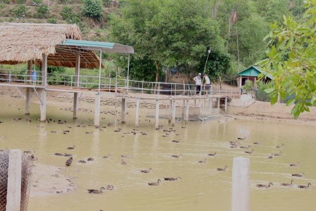 Đôi vợ chồng trẻ bỏ Hà Nội về quê nuôi đàn vịt trời