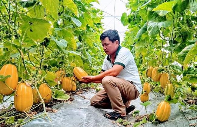 'Độc chiêu' trồng rau quả từ sữa chua hết 'đát'