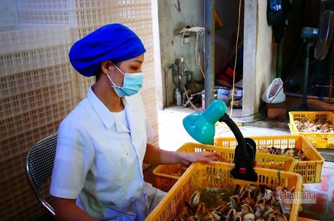 Gia đình ở Hà Nội xây biệt thự, mua ô tô từ lò ấp trứng gà