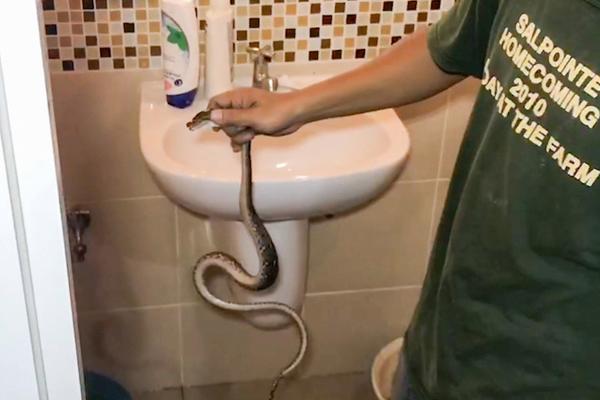 Nam thanh niên bị rắn cắn vào 'cậu nhỏ' khi đi vệ sinh