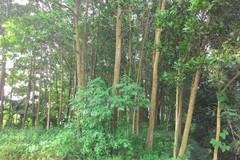 Thanh Hóa trồng mới 7.053 ha rừng
