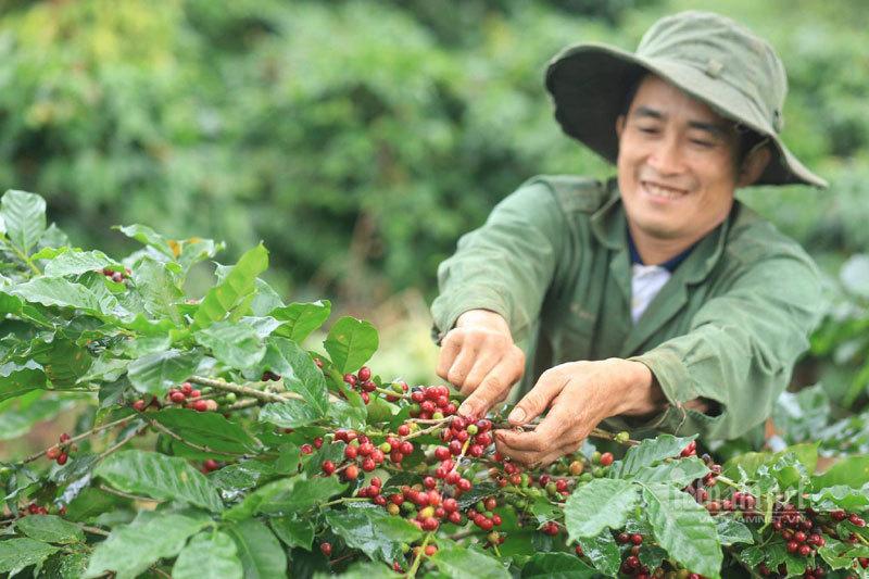 Cà phê Việt có nhiều lợi thế tại thị trường EU