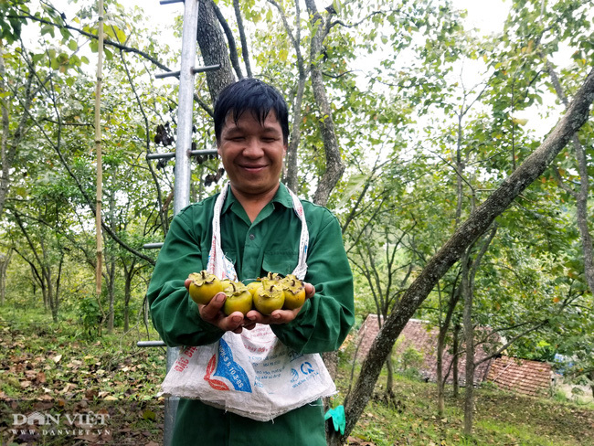 Lạng Sơn: Vùng đất có hồng vành khuyên, loại quả tên nghe như chim vị ngon 'tuyệt phẩm'