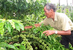 Vietnam's first batch of coffee under EVFTA exported