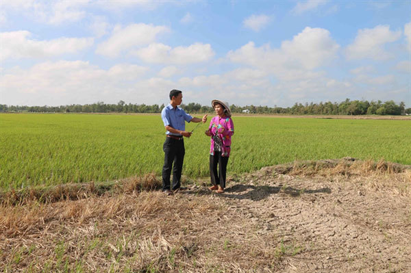 Tra Vinh loses $43m to saltwater intrusion, drought damage