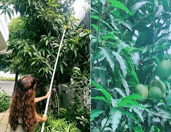 Ngắm biệt thự nhiều cây xanh của Lý Hải cùng vợ kém 16 tuổi