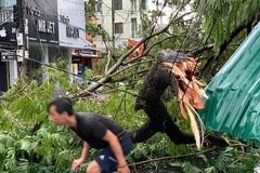 Cành cây cổ thụ gãy rơi trúng, một chuyên viên Phòng Giáo dục tử vong