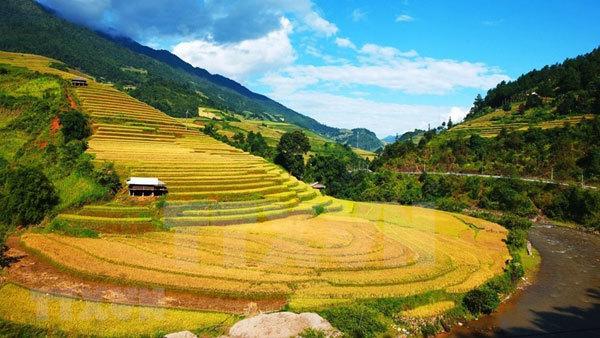 Coming to Mu Cang Chai terraced fields in ripen season