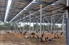 Làm trang trại lại sản xuất ra điện: Làm thật lại sợ 'dính đòn'